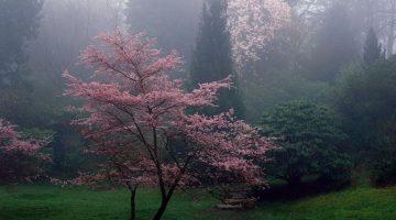 foto_primavera_312